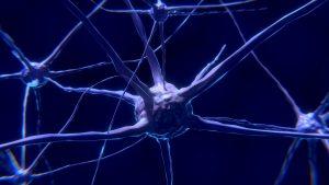 human neuroscience